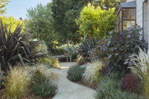 GraniteCrete permeable paving pathway at a home in Mill Valley; photo taken by Caitlin Atkinson.