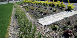 An example of a bioswale in a traditional landscape.